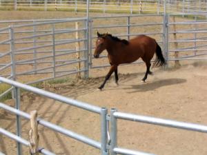 Horse Training 3