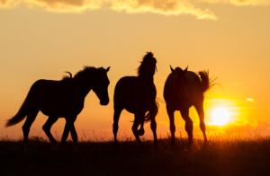 Lead ur best life sunset